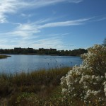 Marine-Park-Salt-Marsh023