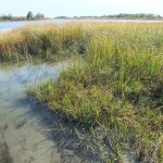 Marine-Park-Salt-Marsh051